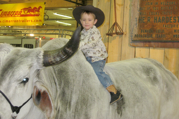 Cade Hemphill sits on a live bull, looking quite ready to spur one to victory.