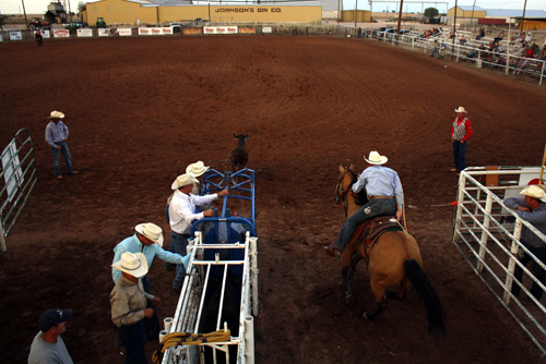 A tie-down roper leaves the chute chasing his calf into Wood Memorial Arena in Silverton.