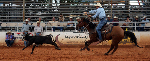Clif Cooper of Decatur, Texas, the 13th-ranked tie-down roper in the PRCA, throws his loop Friday afternoon.