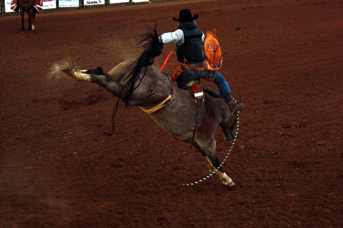 Bareback rider Jake Brown of Hillsboro, Texas, gets bucked off the Carr Pro Rodeo horse Pink Cadillac on Wednesday night.