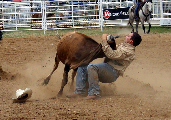 Steer wrestler Riley Duvall of Checotah, Okla., grapples his steer to the ground Thursday during competition at the Will Rogers Stampede PRCA Rodeo in Claremore. (TED HARBIN PHOTO)