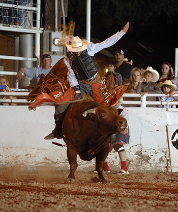 Chris Roundy rides the Carr Pro Rodeo bull The Mexican for 87 points to share the title at the West of the Pecos (Texas) Rodeo in late June. The Mexican is just one of a number of great Carr bulls that will be in Lovington, N.M., for the Lea County Fair and Rodeo, set for 7:30 p.m. Aug. 7-11. (ROBBY FREEMAN PHOTO)