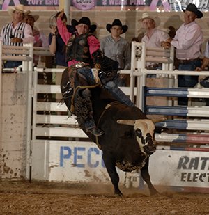 Bull rider Luke Haught tries his skills with Carr Pro Rodeo's Private Eyes during the West of the Pecos (Texas) Rodeo in late June. Carr's top-flight bulls will be a big draw at the Silverton (Texas) Buck Wild Days Rodeo, set for Aug. 16-18. (ROBBY FREEMAN PHOTO)