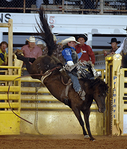 Dusty LaValley of Grand Prairie, Alberta, rides Carr Pro Rodeo's Black Coffee for 87 points to finish in a second-place tie at the Lea County Fair and Rodeo. (ROBBY FREEMAN PHOTO)