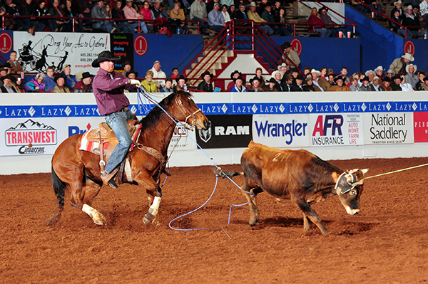 Clayton Hass competes in heeling Friday afternoon during the first go-round of the 2013 Timed Event Championship. (JAMES PHIFER PHOTO)