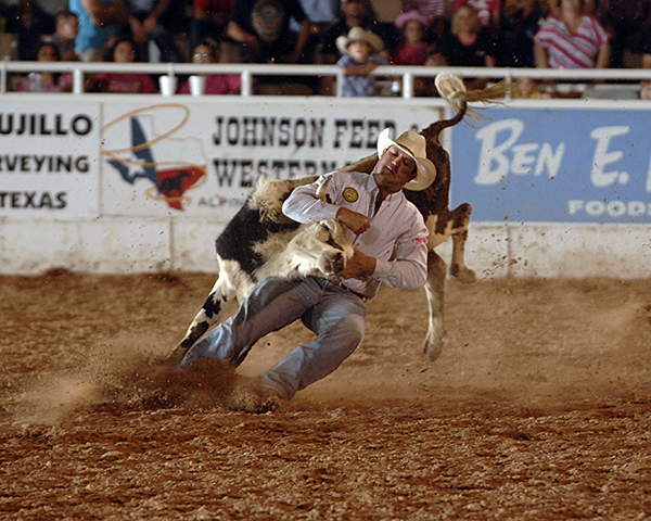 Ben Shofner of Jasper, Texas, grapples his steer on Thursday during the second performance of the West of the Pecos Rodeo. Shofner, the reigning steer wrestling champion in Pecos, leads the two-run aggregate with a time of 12.9 seconds. (ROBBY FREEMAN PHOTO)