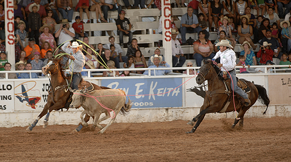 Trevor Brazile, right, and Patrick Smith rope their steer in 6.2 seconds during the first performance of the West of the Pecos Rodeo on Wednesday night at Buck Jackson Arena. They lead the first and second rounds and two-run aggregate. Brazile also leads the average in tie-down roping. (ROBBY FREEMAN PHOTO)