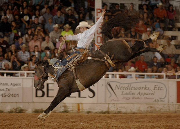 Wrangler National Finals Rodeo qualifier Cody Martin rides NFR bucking horse Miss Congeniality, a Carr Pro Rodeo bronc who has guided cowboys to the title in Lovington, N.M. The Carr Pro Rodeo horse is one of many from Pete Carr that will perform in Lovington from Aug. 7-10. (ROBBY FREEMAN PHOTO)