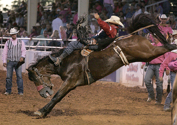 Jessy Davis of Power, Mont., rides Carr Pro Rodeo's Dirty Jacket for 87 points Thursday to lead the bareback riding standings at the Lea County Fair and Rodeo in Lovington, N.M. (BRAD COX/HOBBS NEWS-SUN)