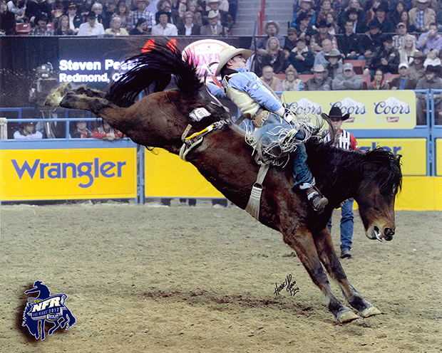 Carr Pro Rodeo's Dirty Jacket and Steven Peebles match moves during the 2012 Wrangler National Finals Rodeo. The powerful gelding will be one of 27 bucking horses and bulls from Carr firms that will be featured at this year's NFR, the most of any one contractor in the modern era. (DAN HUBBEL PHOTO)