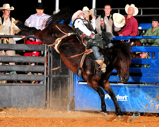 Steven Dent rides Carr Pro Rodeo's Real Deal for 89 points Friday night to take the bareback riding lead at the Waller County Fair and Rodeo in Hempstead, Texas. (JAMES PHIFER PHOTO)