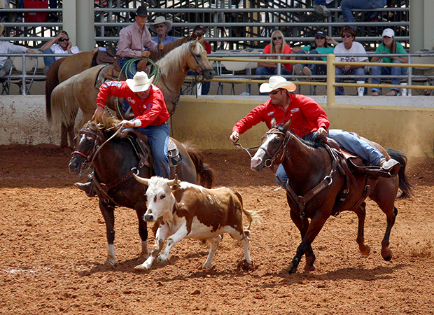 Steer wrestler Bray Armes, right, moves into position during his first-round run in Lovington, N.M. Armes has ridden the ups and down of the 2013 season to the Wrangler National Finals Rodeo. It is Armes' second NFR qualification.