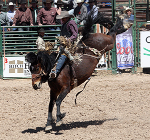 Great bucking animals and amazing hospitality are reasons so many of ProRodeo's biggest stars make their home in the Oklahoma Panhandle each spring for the Guymon Pioneer Days Rodeo, which features 942 entries this year. (LYNETTE HARBIN PHOTO)