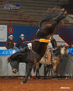 Wazzup is a 3-year-old brown gelding that is the pride and joy of Guy French, the executive director of the United Bucking Horse Association, an organization that showcases young bucking horses. (TODD BREWER PHOTO)