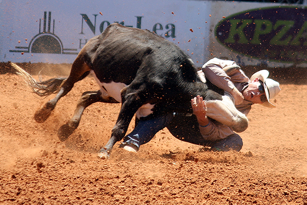 Hunter Cure, the 2013 world champion steer wrestler, grapples his animal to the ground during last year's Lea County Fair and Rodeo. He is one of numerous world champions who will be part of the Lovington rodeo next week.