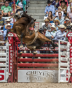 Richmond Champion and Dirty Jacket burst out of the chute in Cheyenne en route to a 91-point ride in July. (RIC ANDERSEN PHOTO)