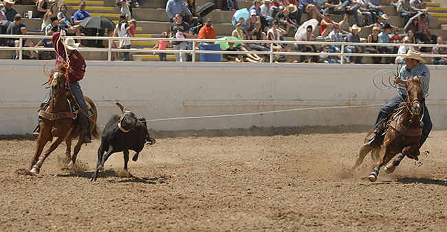 Jake Long, left, and Coleman Proctor rope their final steer Sunday afternoon to claim the team roping title at the Guymon Pioneer Days Rodeo. (ROBBY FREEMAN PHOTO)