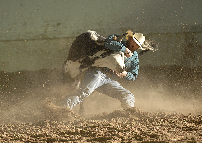 Jason Thomas wrestles his third-round steer to the ground in 3.6 seconds on Saturday night to take the steer wrestling lead at the Guymon Pioneer Days Rodeo. (ROBBY FREEMAN PHOTO)