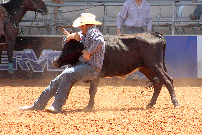 Tyler Pearson stops his steer en route to a first-round winning 3.3-second steer wrestling run Saturday afternoon at the Lea County Fair and Rodeo.