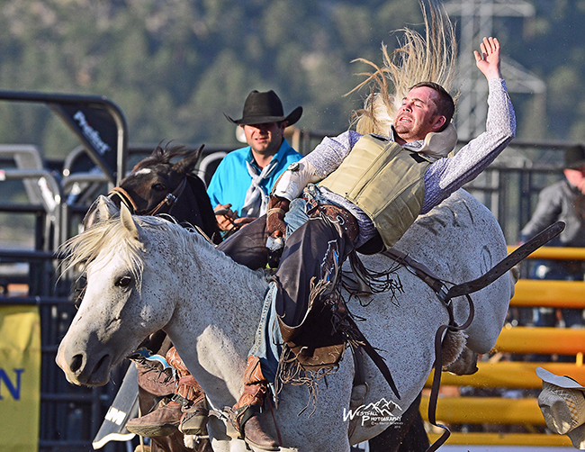 Joel Schlegel rides Cervi Rodeo's Little Bo Beep for 83.5 points Thursday night to take the bareback riding lead at the Rooftop Rodeo. (GREG WESTFALL PHOTO)