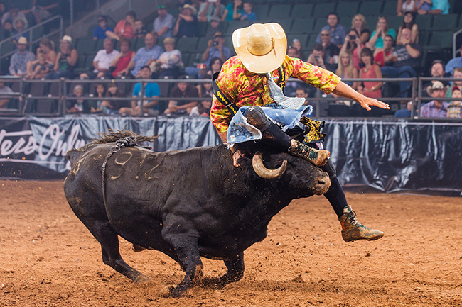 Zach Flatt attempts to jump a bull during a recent Bullfighters Only contest. Flatt will be one of the featured bullfighters that will be part of the BFO competition that takes place in conjunction with the Kit Carson County ProRodeo. (TODD BREWER PHOTO)