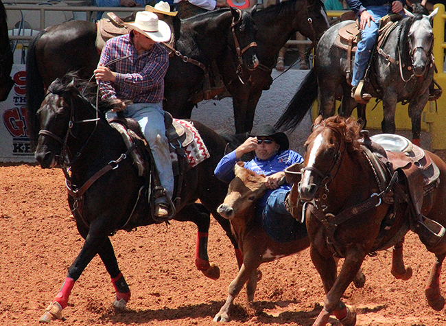 Dean Gorsuch jumps his steer during the first round of steer wrestling Wednesday at the Lea County Fair and Rodeo. Gorsuch leads the first round with a 4.3, the second round with a 3.9 and the average.