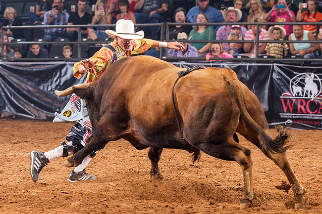 Cody Webster has been to seven events so far this Bullfighters Only season and has moved to No. 1 in the standings. He will be one of three men battling for the title on Friday night in Ellensburg, Wash. (TODD BREWER PHOTO)
