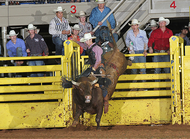 Colten Jesse of Konawa, Okla., rides Pete Carr's Classic Pro Rodeo's Lone Star for 90 points during the championship round of the Lea County Xtreme Bulls on Tuesday night in Lovington, N.M. (PEGGY GANDER PHOTO)