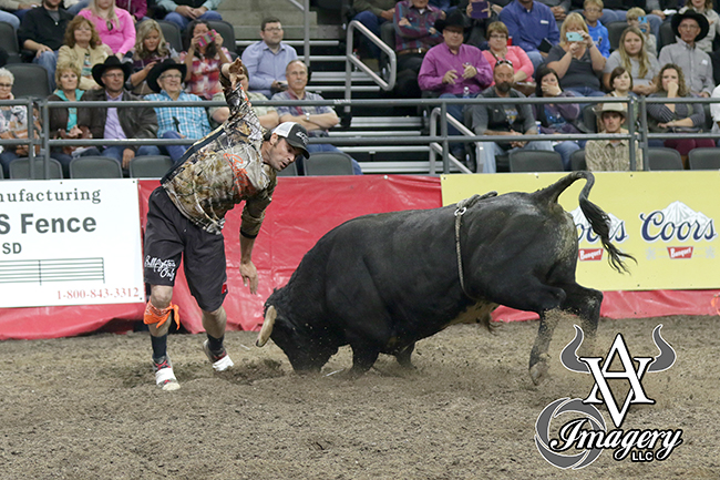 Toby Inman fakes War Fighting Bulls' Ghost Face during the weekend's Bullfighters Only event in Sioux Falls, S.D. Inman posted an 89-point fight with War Fighting Bulls' Ghost Face. He also won the two-fight aggregate to claim the Sioux Falls title. (PHILLIP KITTS PHOTO)