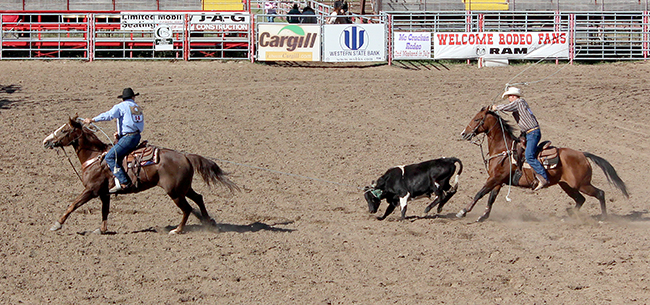 Brian Padilla, left, and Mike Weir finish up their third-round run Sunday afternoon to clinch the year-end championship in the 40-40 team roping in the Kansas Professional Rodeo Association.
