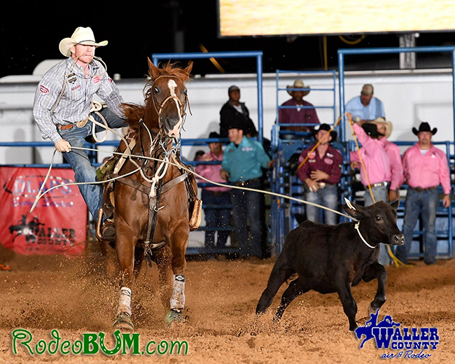 World champion saddle bronc rider Jacobs Crawley competes in tie-down roping last week during the Waller County Fair and Rodeo. By competing in both events, Crawley won the Waller County Linderman Award. (JAMES PHIFER PHOTO)