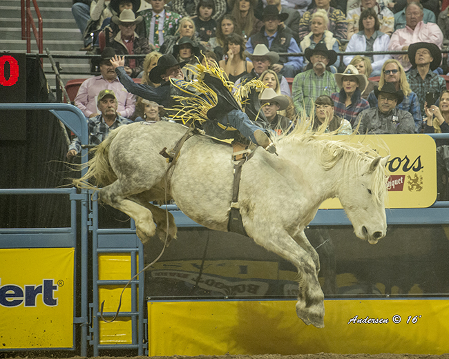 Tanner Aus spurs C5 Rodeo's Virgil for 88 points to share the third-round victory at the Wrangler National Finals Rodeo. (RIC ANDERSEN PHOTO)