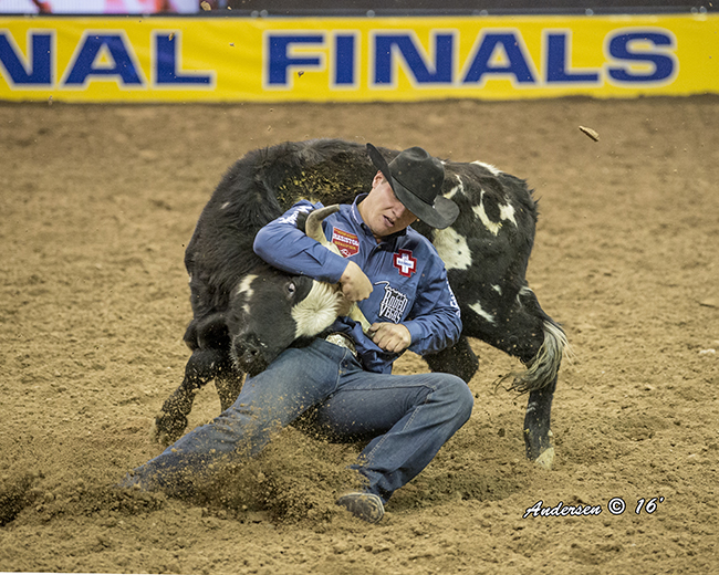 J.D. Struxness, shown wrestling his steer in Sunday's fourth round, also won on the fifth night and has earned victories each of the last three rounds. He is second in the world standings. (RIC ANDERSEN PHOTO)