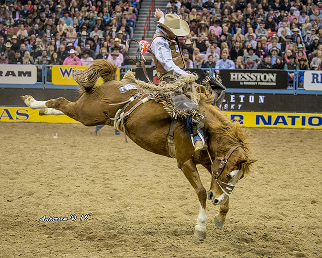 Clay Elliott rides Son of Sadie during the fifth go-round of the Wrangler National Finals Rodeo on Monday night. He also placed in Tuesday's sixth round and has earned more than $25,000 in Las Vegas in six nights. (RIC ANDERSEN PHOTO)