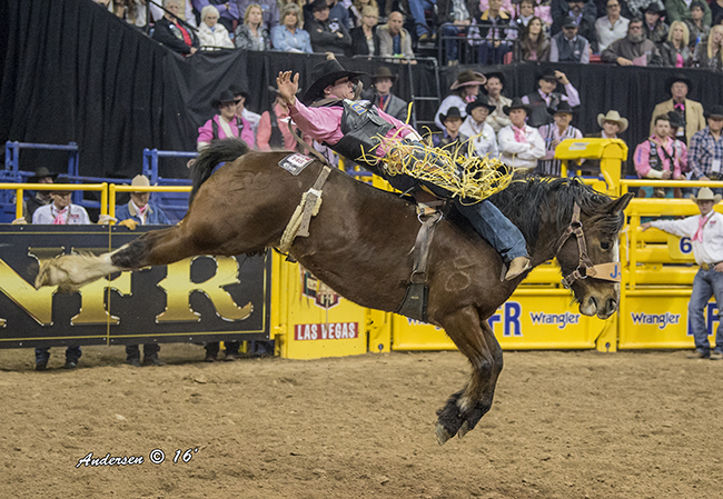 Bareback rider Tanner Aus spurs J Bar J Rodeo's Hell on Hooves during the fifth go-round. He placed for the fourth time Tuesday in the sixth round and has earned more than  $72,000 so far at the Wrangler National Finals Rodeo. (RIC ANDERSEN PHOTO)