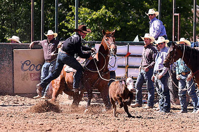 Trevor Brazile earned both the tie-down roping and all-around championships this past week at the Guymon Pioneer Days Rodeo. (JAMES PHIFER PHOTO)