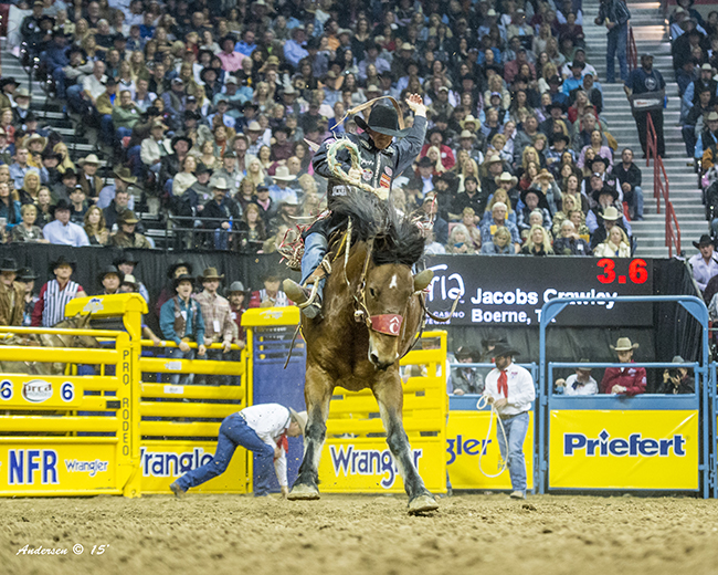 Jacobs Crawley rides Pete Carr's Big Tex to the 2015 world championship. Big Tex is one of many top-level Carr animals that will be part of the Eagle County Fair and Rodeo (RIC ANDERSEN PHOTO)