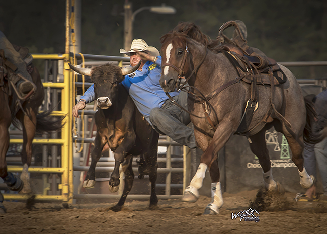 Cody Doescher transitions from his horse to his steer during his 3.9-second steer wrestling run on opening night of Rooftop Rodeo. (GREG WESTFALL PHOTO)
