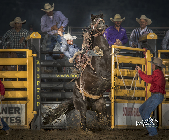 Cort Scheer gets a raring start to his 82.5-point ride on Cervi's Shot Glass on Sunday at Rooftop Rodeo. (GREG WESTFALL PHOTO)