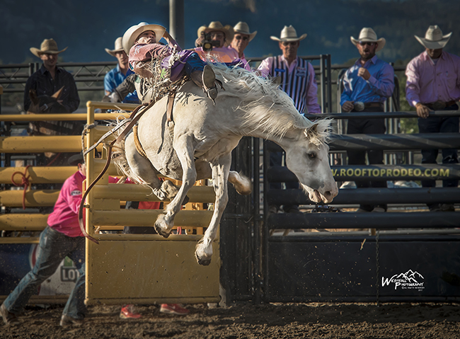 Jake Brown rides Cervi Rodeo's Rose Puff for 84.5 points Saturday night to take the bareback riding lead at Rooftop Rodeo. (GREG WESTFALL PHOTO)