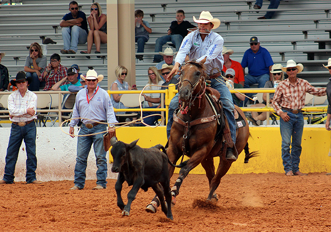 Marcos Costa ropes his first-round calf during the 2016 Lea County Fair and Rodeo. Costa finished second in the two-run aggregate.
