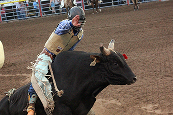 Chase Dougherty rides Frontier Rodeo's Long Nights for 81 points Tuesday night during the Xtreme Bulls in Dodge City. Dougherty failed to place among the top eight.