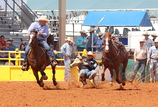 Matt Reeves wrestles his first-round steer in 3.8 seconds with the help of his hazer, Quinn Campbell. Reeves has a two-run cumulative time of 7.9 seconds and leads the lea County Fair and Rodeo. (PEGGY GANDER PHOTO)