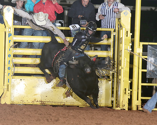 Three-time world champion Sage Kimzey rides Pete Carr Pro Rodeo's Black Gold in the championship round Tuesday night to win his first Lea County Xtreme Bulls title. (PEGGY GANDER PHOTO)