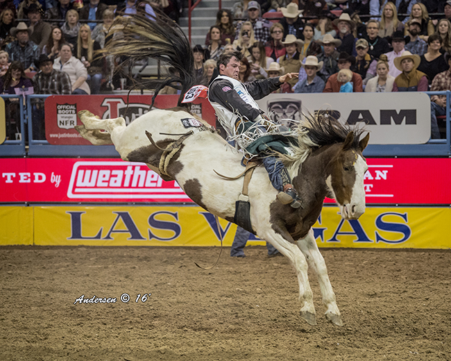 Richmond Champion returns to the Wrangler National Finals Rodeo for the third time in his career after earning more than $200,000 riding bucking horses this year. (RIC ANDERSEN PHOTO)