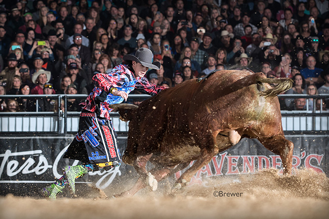 Seventeen-year-old Seth Wilson battles his bull Sunday afternoon during the final Bullfighters Only qualifier for the Las Vegas Championship. Wilson scored 87.5 points in his fight. (TODD BREWER PHOTO)