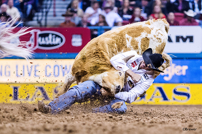 Tyler Pearson tries to maintain hold of his final steer during his world-championship season during the 10th round of the National Finals Rodeo. It is his first gold buckle. (TODD BREWER PHOTO)