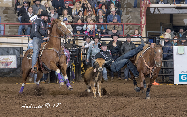 Dakota Eldridge moves onto his steer during his steer wrestling run Saturday. Eldridge leads both the first round and the average at the San Angelo Stock Show and Rodeo with four performances remaining in the preliminary rounds. (RIC ANDERSEN PHOTO)