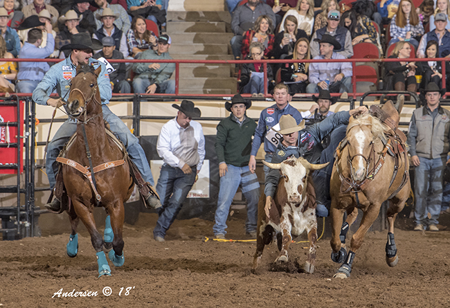 Tyler Waguespack, the 2015 world champion steer wrestler, transitions to his second-round steer Saturday at the San Angelo Stock Show and Rodeo. He is 8.5 seconds on two runs and leads the average. (RIC ANDERSEN PHOTO)