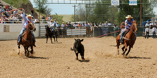For the first time in 11 years, muley team roping will return to the Guymon Pioneer Days Rodeo the first weekend in May. It will add a wild flavor to an already excellent rodeo. (DALE HIRSCHMAN PHOTO)